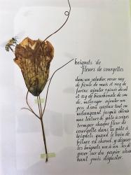 L herbier 6